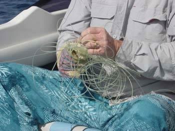 Démêler le fil du pêcheur dans Communauté spirituelle kone6